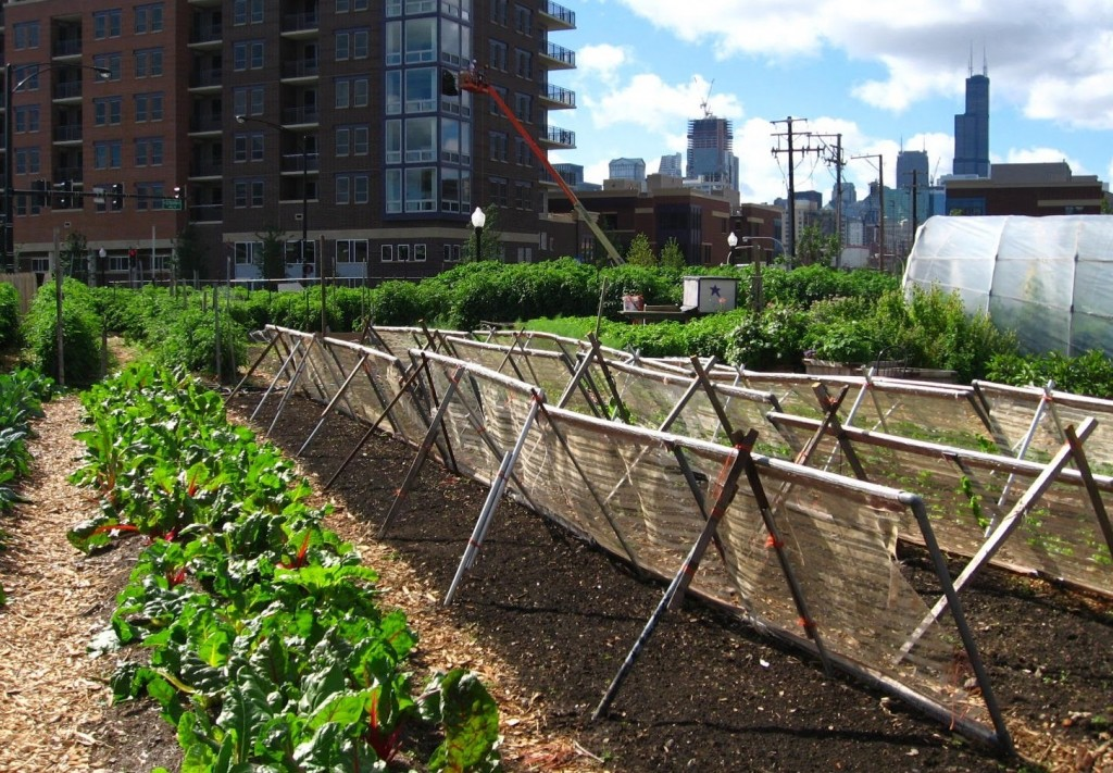 Food in Urban Environments
